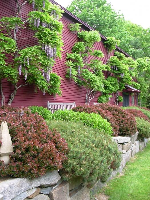 Wisteria Garden